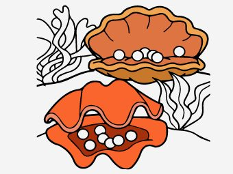25 Interesting Shell Coloring Pages For Your Little Ones