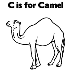 The C For Camel