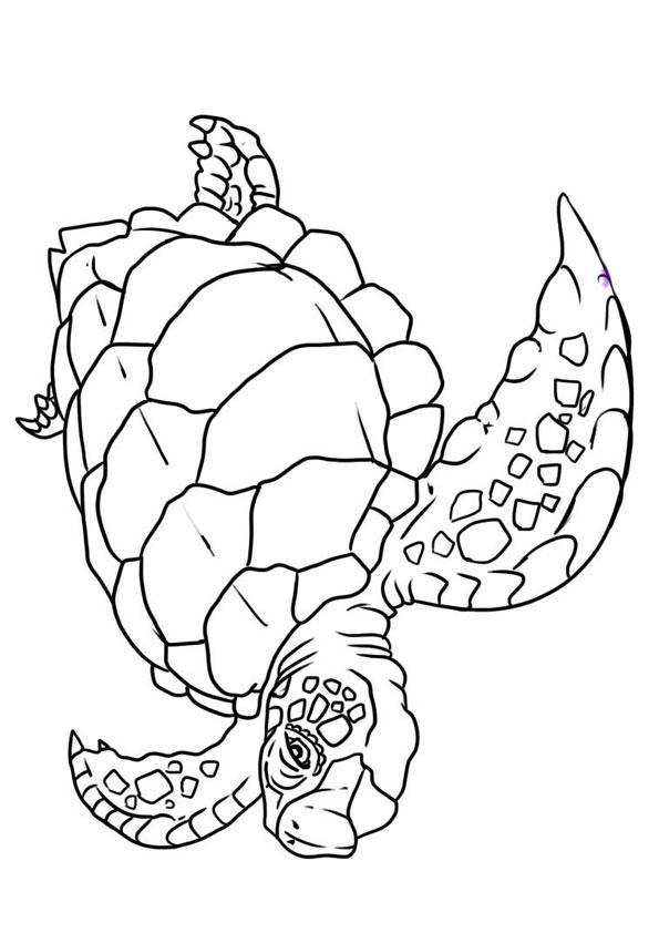 The-Flatback-Turtle