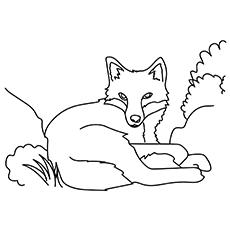 The-Fox-Relaxing-16