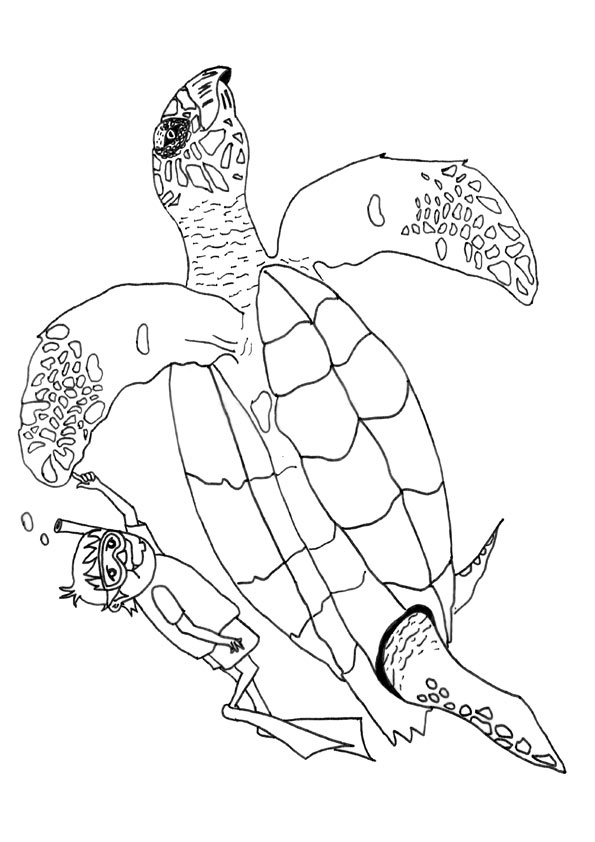 The-Hawksbill-Turtle