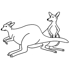 Kangaroos In Balle Position Coloring Pages