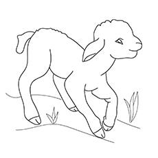 The-Lamb-16