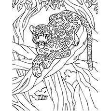 The-Leopard-on-tree
