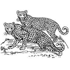 The-Leopards--two