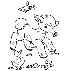 the little sheep - Sheep Coloring Page
