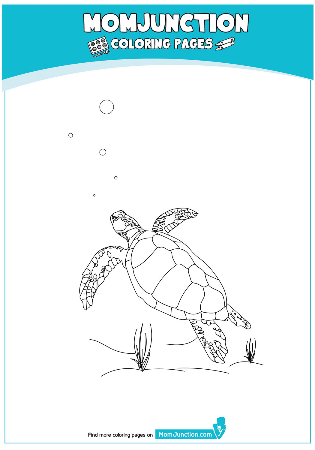 The-Loggerhead-Turtle-Color-17