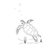 The Loggerhead Turtle Color