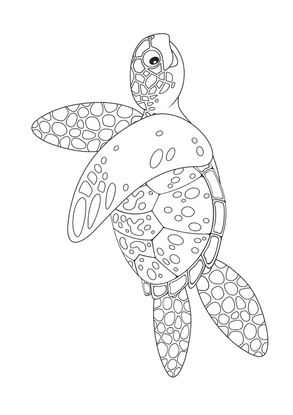 The-Marine-turtle