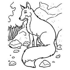 The-Mountain-Fox