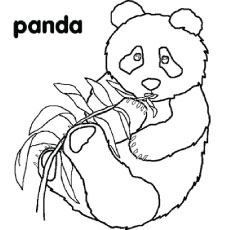 the mummy panda and baby panda color to - Panda Coloring Page