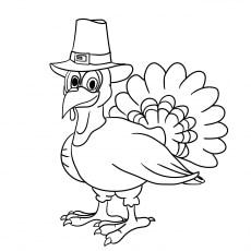 The Pilgrim Turkey