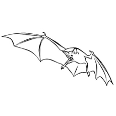 Coloring Pages of Red Fruit Bat Printable
