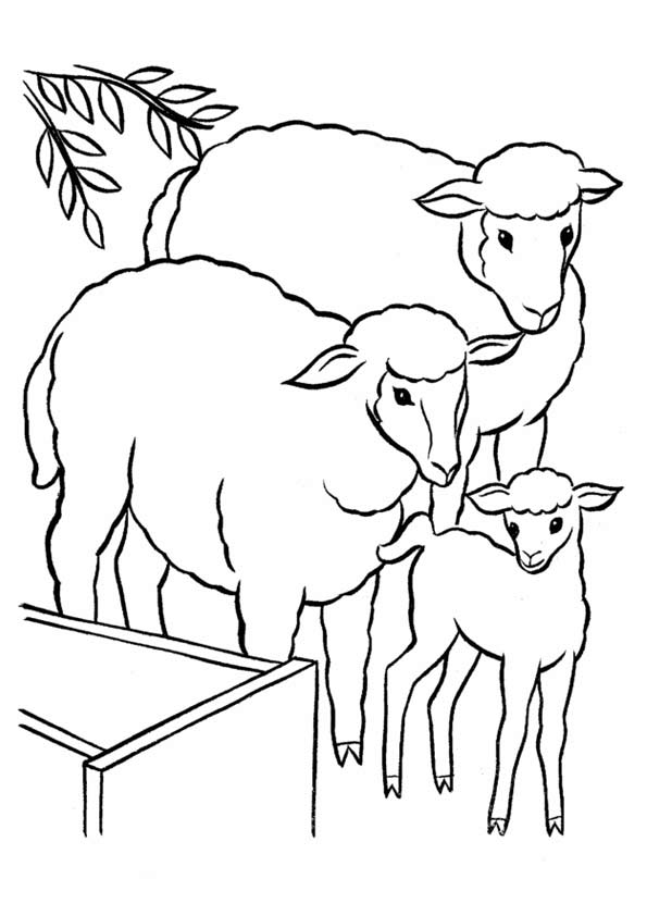 The-Sheep-With-Lamb-coloring