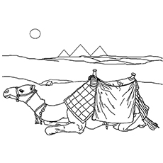 The-Sitting-Camel