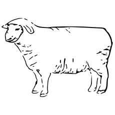 The-Stationery-Sheep