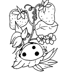 Printable Strawberries And Ladybug Coloring Page