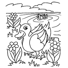 Coloring Pages of Swimming Ducks
