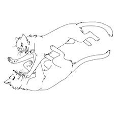 The Warrior Cats Fighting