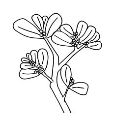 A Mistletoe Coloring Page