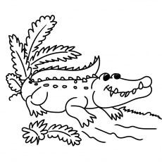 The-alligator-natural-habitat