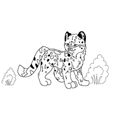 The-baby-snow-leopard-16