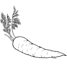 Uprooted Carrot to Color
