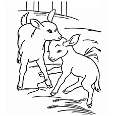Baby Goat Coloring Page - Free Goat Coloring Pages ... | 230x230
