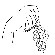 The-fingers-holding-grapes-16