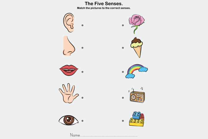 The five senses learning activity