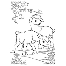 goat in the field color pages - Coloring Page Goat