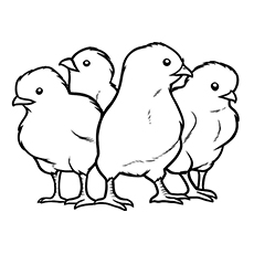 Group of Chicks Picture to Color