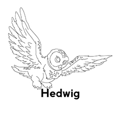 The Hedwig