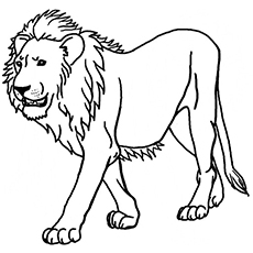 The Majestic Lion1