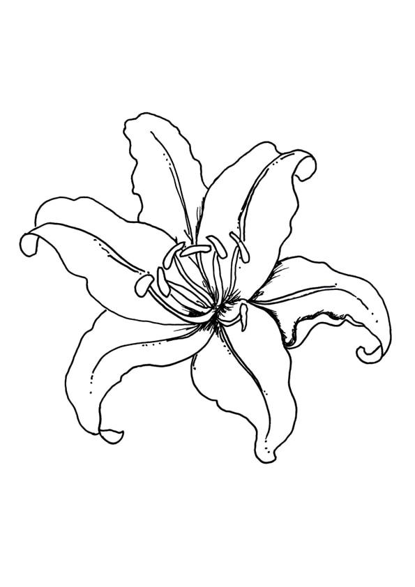 The-pretty-lily01