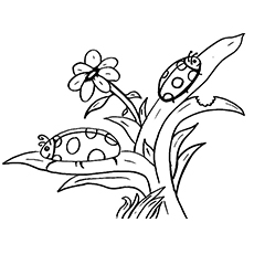 Two Ladybugs on Different Leaves Coloring pages
