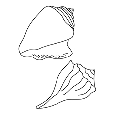 Two-Types-Of-Sea-Shell-16 coloring pages