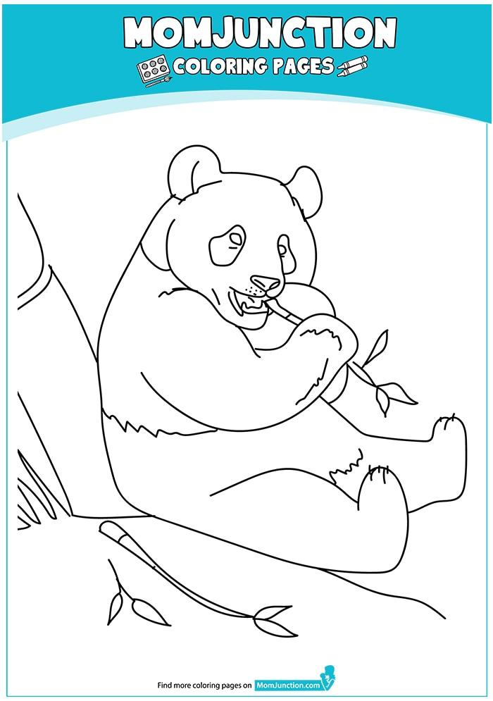 Zoo-Panda-Bear-17