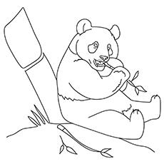 Zoo Panda Bear 17