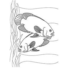 Top 10 Tropical Fish Coloring Pages For Your Toddler Needhi Gandhi On July 13 2015 A Couple