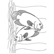 a-fish-couple