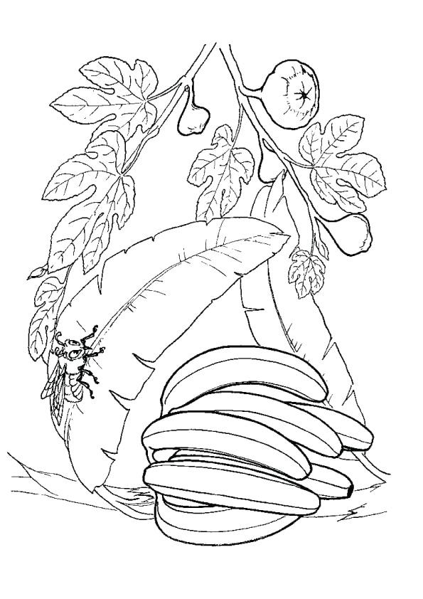 banana-plant-and-bee