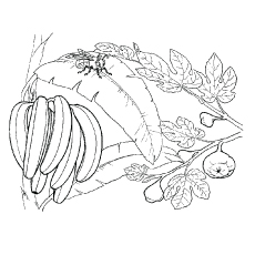 Bunch of Bananas and Bee on the Leaf of the Tree Coloring Pages