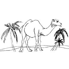 camel-and-palm-tree