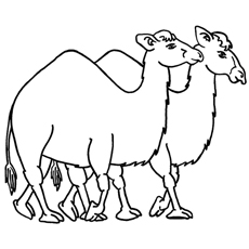 camel-with-friend