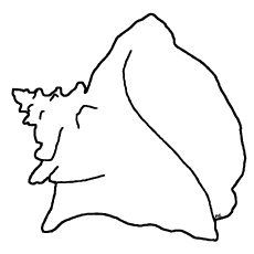 coloring-page-queen-conch