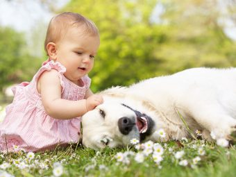 Dog Allergies In Babies - Symptoms, Causes And Treatments
