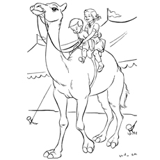 kids-riding-on-camel