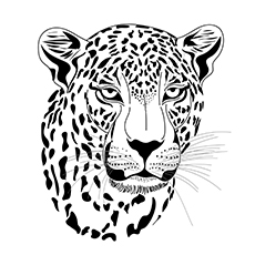 leopard-executed-16