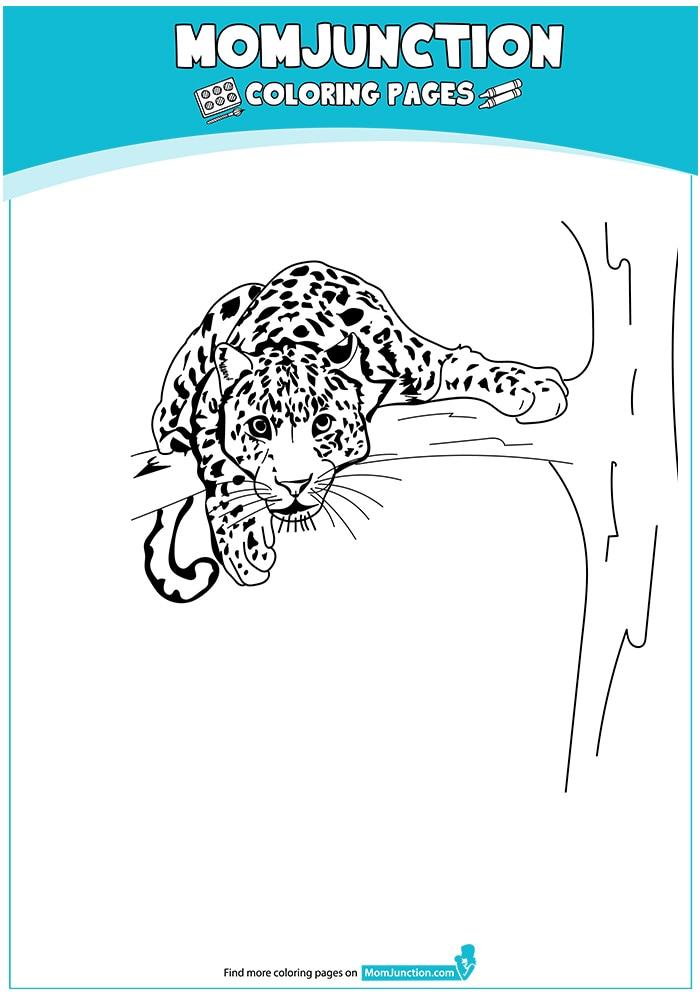 lurkerleopard-16
